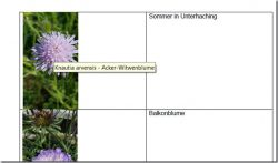 Word – Alternativtext bei Bildern